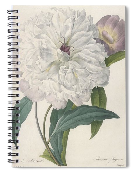 Paeonia Flagrans Peony Spiral Notebook