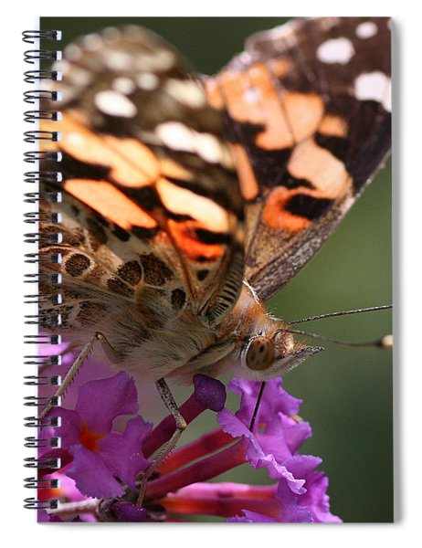 Painted Lady On Butterfly Bush Spiral Notebook