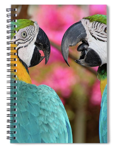 Pair Of Blue And Gold Macaws Engaged Spiral Notebook