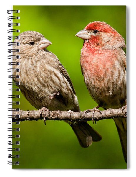 Pair Of House Finches In A Tree Spiral Notebook