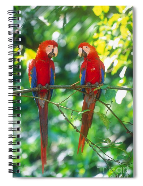Pair Of Scarlet Macaws Spiral Notebook
