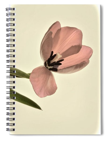Pale Pink Tulip Spiral Notebook
