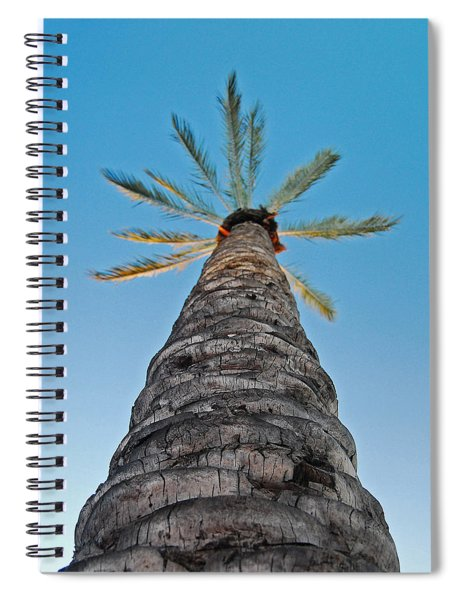 Palm Tree Looking Up Spiral Notebook