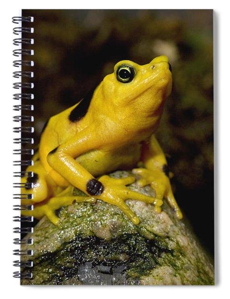 Panamanian Golden Frog Spiral Notebook
