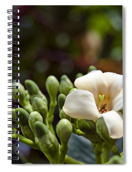 Papaya Flower Spiral Notebook