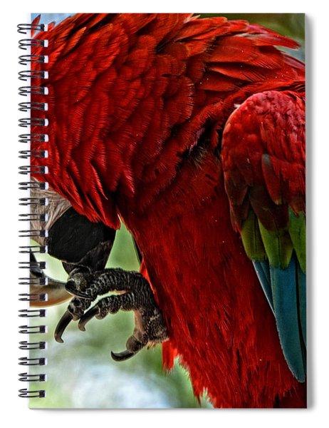 Parrot Preen Hdr Spiral Notebook