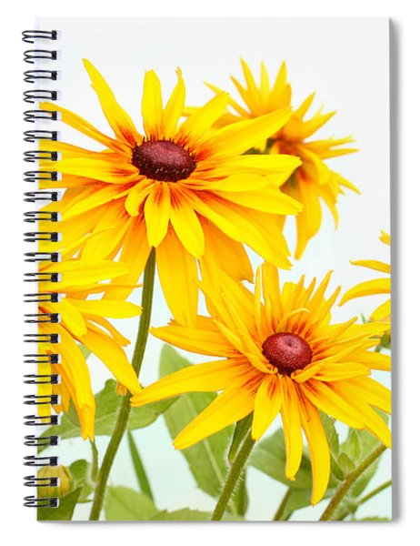 Patch Of Black-eyed Susan Spiral Notebook