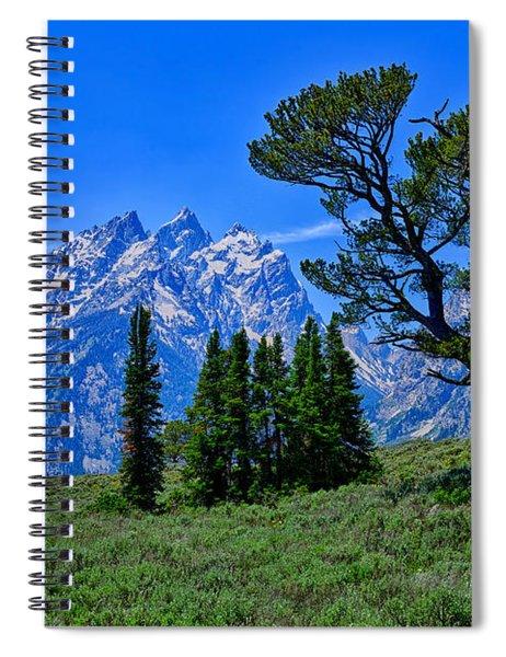 Patriarch Tree Spiral Notebook