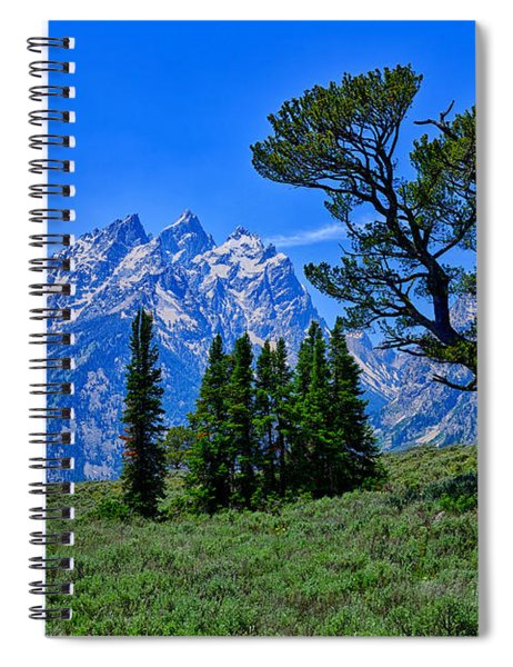 Patriarch Tree Spiral Notebook