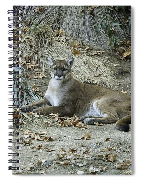 Bobcat Spiral Notebook by Mae Wertz