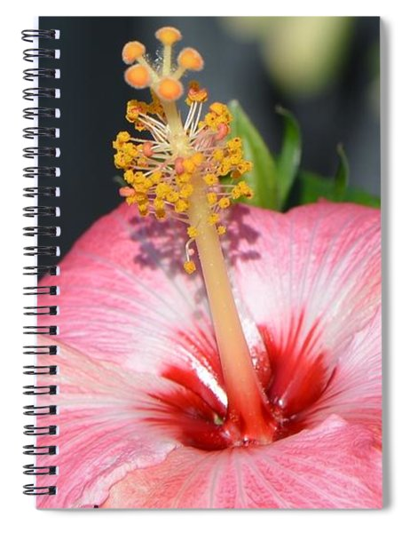 Peaceful Tingles - Signed Spiral Notebook