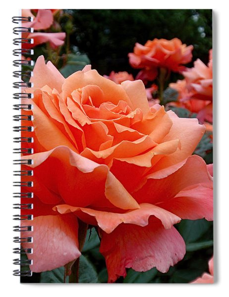 Peach Roses Spiral Notebook