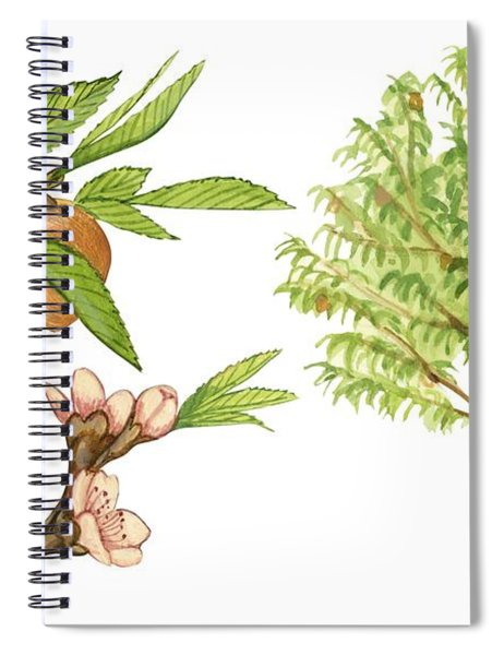 Peach Tree Spiral Notebook