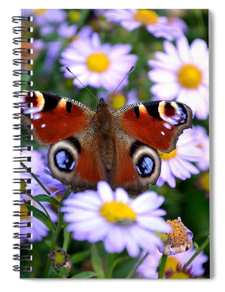 Peacock Butterfly Perched On The Daisies Spiral Notebook