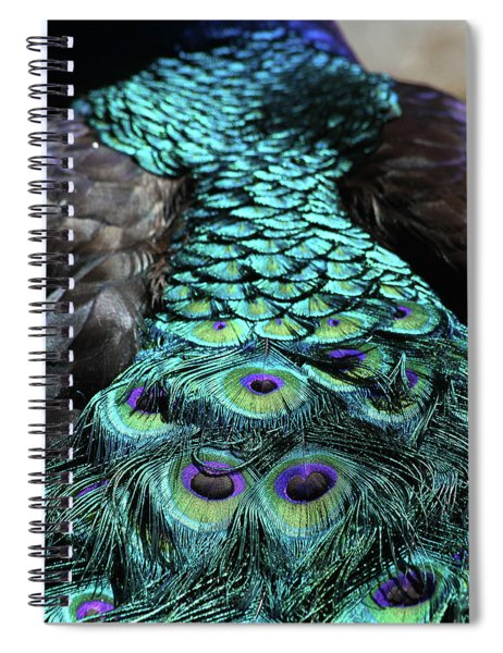 Peacock Trail Spiral Notebook