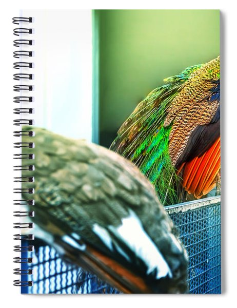 Peacocks Spiral Notebook