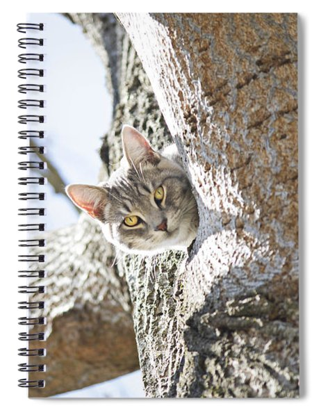 Peaking Cat Spiral Notebook