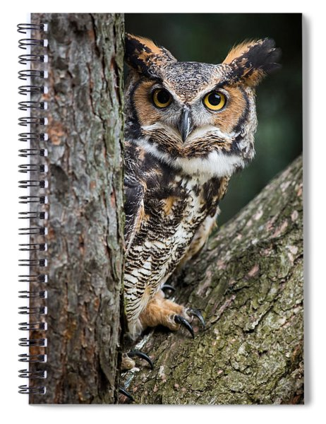 Peering Out Spiral Notebook