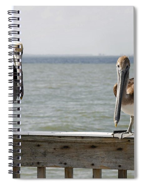 Pelicans On The Pier At Fort Myers Beach In Florida Spiral Notebook