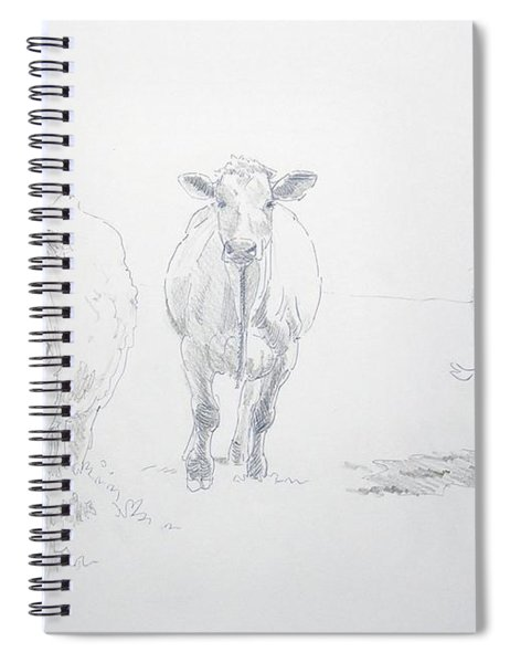 Pencil Drawing Of Three Cows Spiral Notebook
