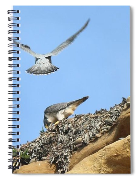 Peregrine Falcons - 2 Spiral Notebook