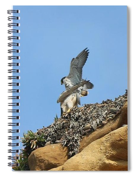 Peregrine Falcons - 3 Spiral Notebook