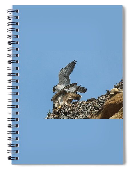 Peregrine Falcons - 4 Spiral Notebook