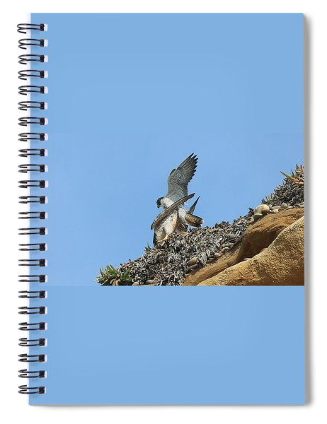 Peregrine Falcons - 5 Spiral Notebook