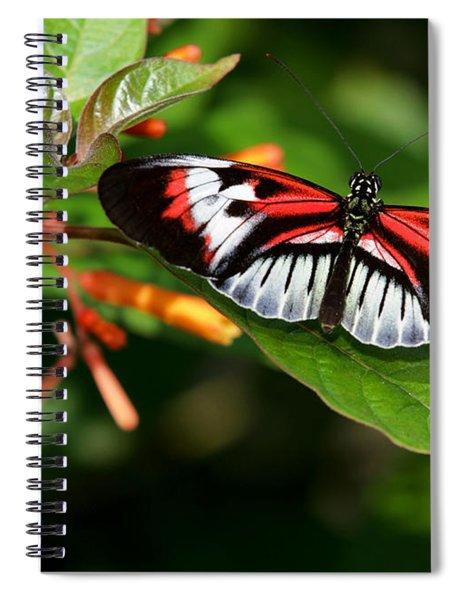 Piano Key Butterfly On Fire Bush Spiral Notebook
