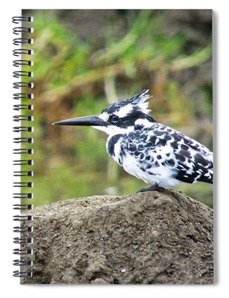 Pied Kingfisher Spiral Notebook
