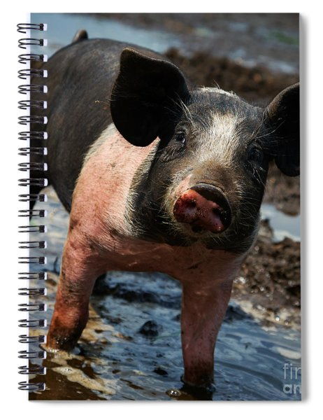 Pig In The Mud Spiral Notebook