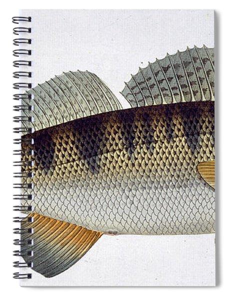 Pike Perch Spiral Notebook
