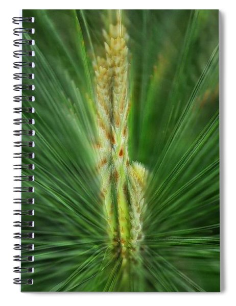 Pine Cone And Needles Spiral Notebook