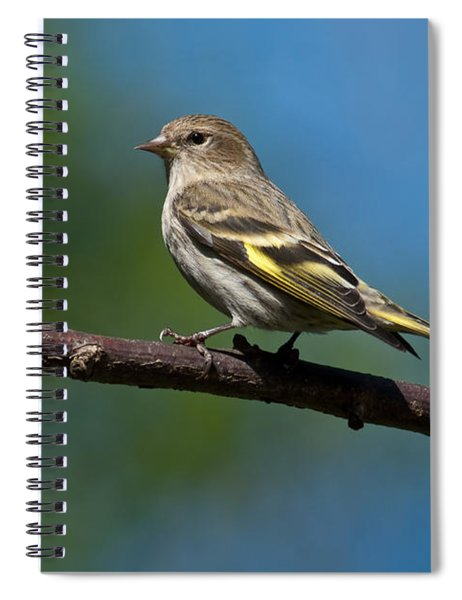 Pine Siskin Perched On A Branch Spiral Notebook