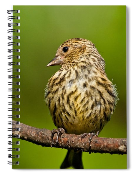 Pine Siskin With Yellow Coloration Spiral Notebook
