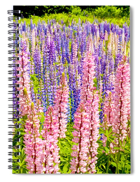 Pink And Purlpe Spiral Notebook