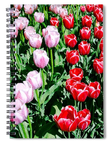 Pink And Red Tulips Spiral Notebook