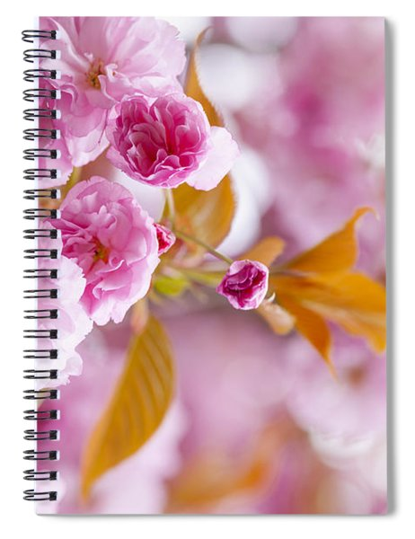 Pink Cherry Blossoms In Spring Orchard Spiral Notebook