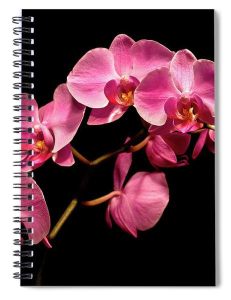 Pink Orchids 3 Spiral Notebook