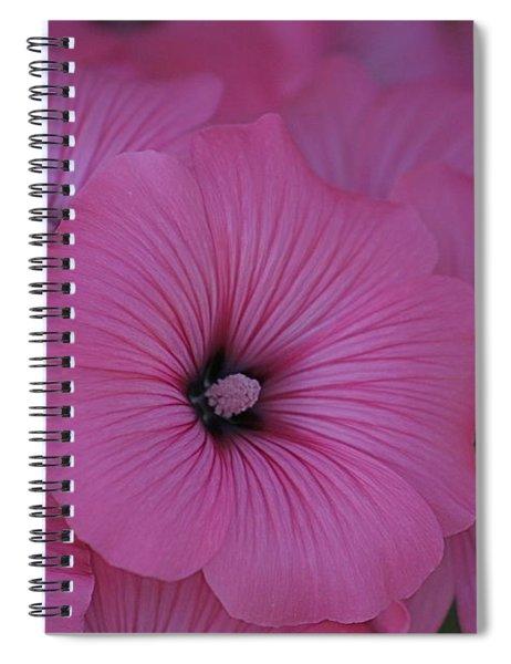 Pink Petunia Spiral Notebook