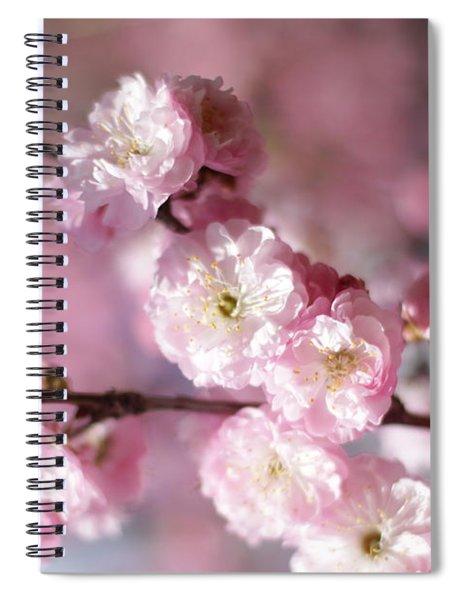 Pink Plum Branch 1 Spiral Notebook