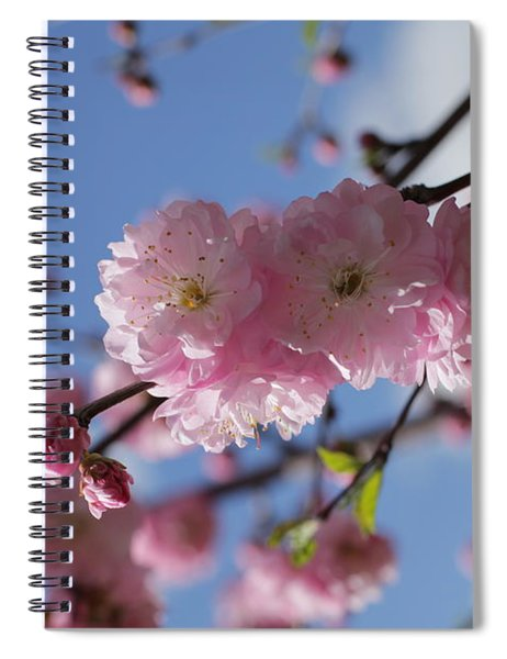 Pink Plum On Sky 2 Spiral Notebook