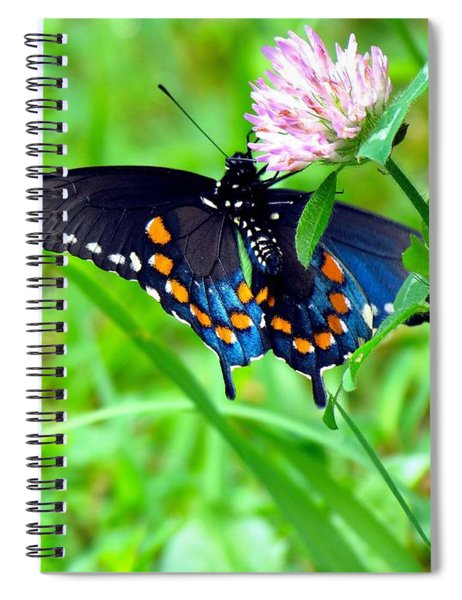 Pipevine Swallowtail Hanging On Spiral Notebook