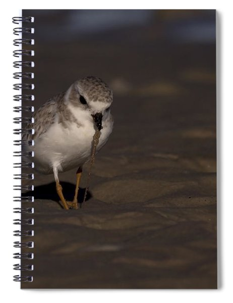 Piping Plover Photo Spiral Notebook