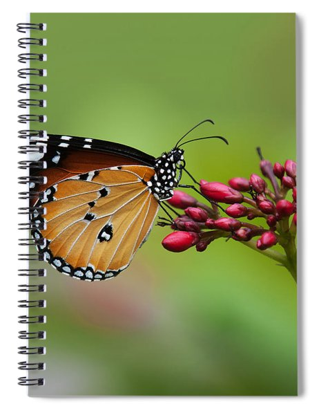 Plain Tiger Or African Monarch Butterfly Dthn0008 Spiral Notebook