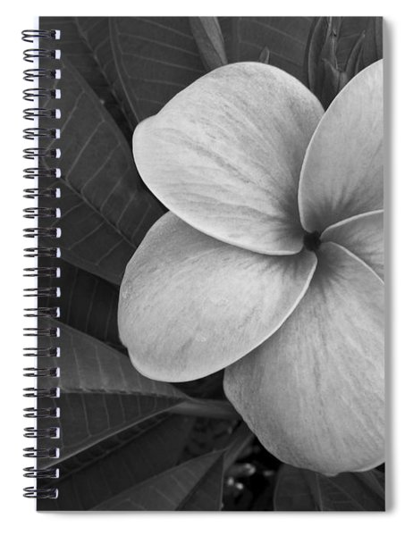 Plumeria With Raindrops Spiral Notebook