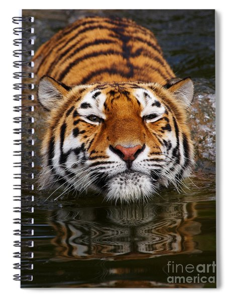 Portrait Of A Bathing Siberian Tiger Spiral Notebook