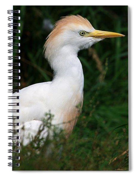 Portrait Of A White Egret Spiral Notebook