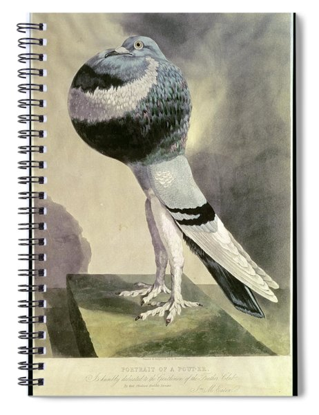 Portrait Of  Pouter Pigeon Coloured Engraving Spiral Notebook