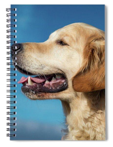 Portrait Of Young Golden Retriever Spiral Notebook